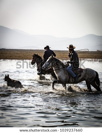 Horses with Dog Stok fotoğraf ©
