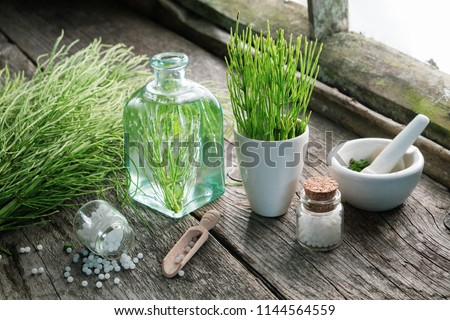 Horsetail healing herbs, bottle of equisetum infusion, mortar and bottles of homeopathic globules. Homeopathy and herbal medicine. #1144564559