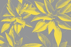 Hosta leaves pattern in trendy 2021 new colors. Illuminating Yellow and Ultimate Gray. Color of the Year 2021. Summer plants wallpaper.