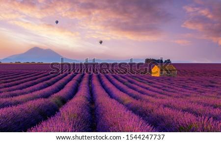 hot air ballon over lavender fields Stock photo ©