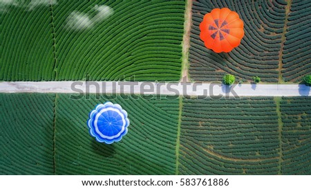 Hot air balloon fly over green tea farm, top view, bird eye view from drone