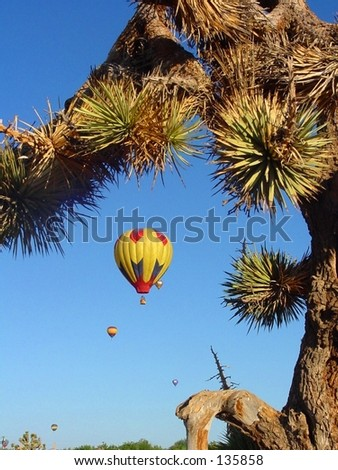 Hot air baloons against a desert sky with joshua tree