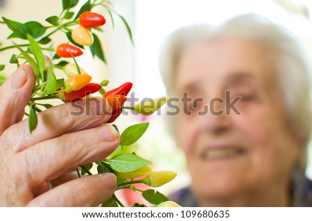 hot chili peppers, plant