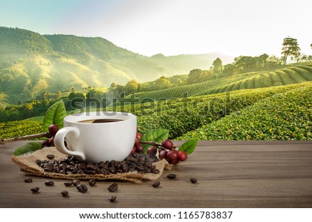 Hot coffee cup with fresh organic red coffee beans and coffee roasts on the wooden table and the plantation background with copy space for your text