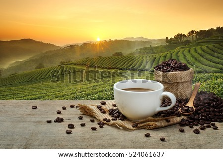 Hot coffee cup with organic coffee beans on the wooden table and the plantations background with copy space
