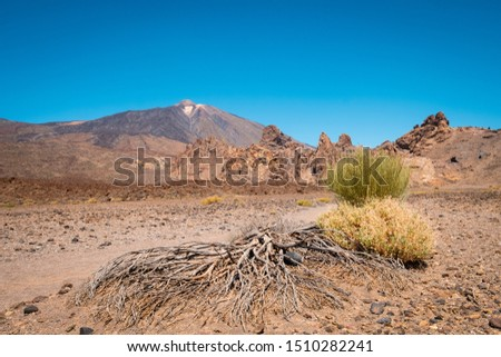 hot desert landscape with driep up vegetation and mountain background