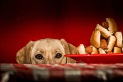 Hot Dog Birdee Picnic Time