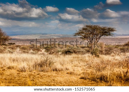 Hot, dry, parched Serengeti desert in Africa