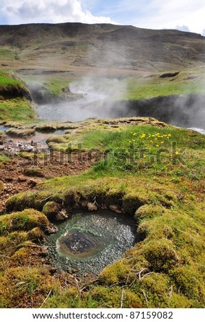 Hot spring area with yellow flowers, Iceland