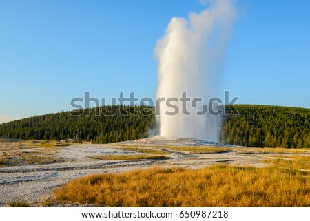 Hot spring explosion. Old Faithful Geyser, Yellowstone National Park, Wyoming, USA #650987218