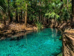 Hot spring in Tropical Northern Territory Rain forrest