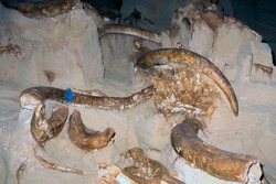 Hot Springs South Dakota Mammoth Site, Mammoth fossils being unearthed, South Dakota, USA