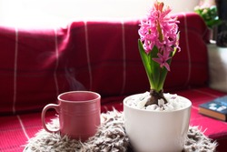 Hot tea in a pink mug, hyacinth flower and a book on the sofa, home inside, interior home decoration