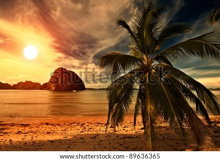 Hot Tripical Beach Sunset with a Palm