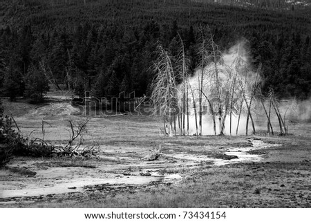 Hot water flows to hot pool behind dead trees, Yellowstone.