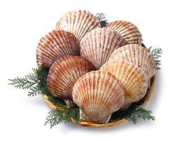 Hotate shellfish , scallop
