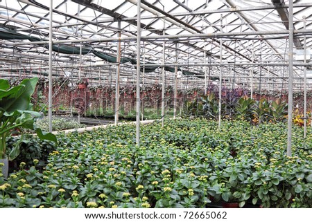 Hothouse for a flower cultivation inside