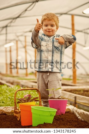 hothouse industry. hothouse industry pdoruction. small child farmer work in hothouse industry. hothouse industry concept. fun #1343178245