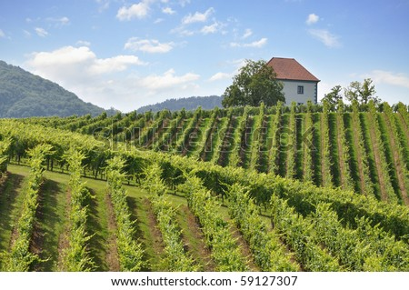 House among the vineyards in summer.Slovenske Konjice, Slovenia