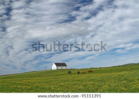 House and icelandic horses on a dramatic sky near Husavik in Iceland