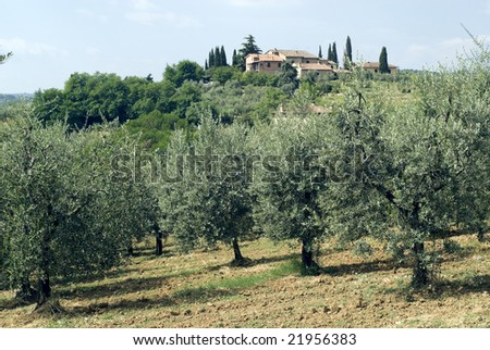 House and olive trees on the hills near San Gimignano (Siena, Tuscany, Italy) at summer