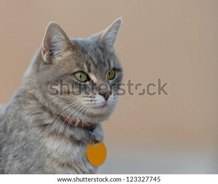 House cat portrait