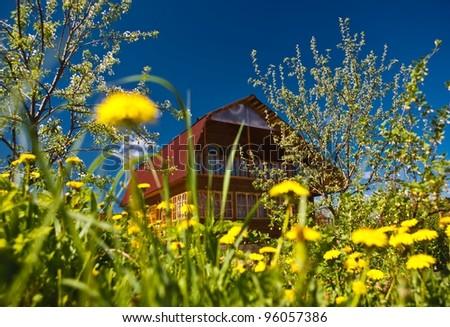 house dandelions spring