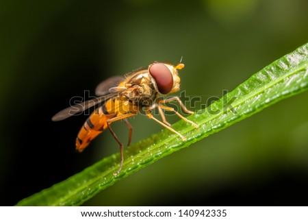 house fly #140942335