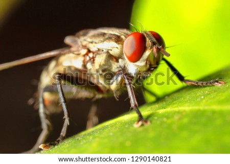 House fly,Blow fly on leaf.