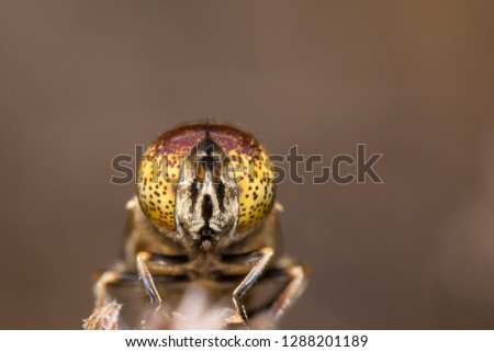 House fly, Fly, Garden fly on plant