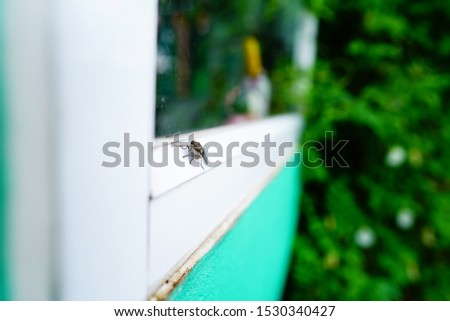 House fly, Fly, House fly on glass window borders
