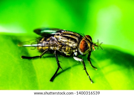 House fly, Fly, House fly on green leaf.