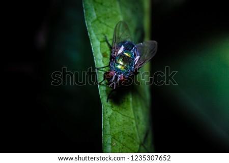 House fly, Fly, House fly on leaf