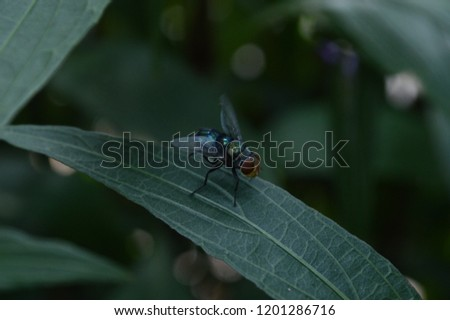 House fly, Fly, House fly on leaf. Fly Insect