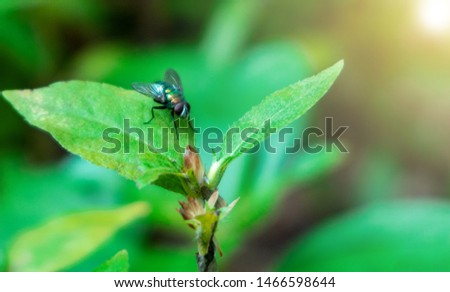 House fly, Fly, House fly on leaf, fly on a plant with green background