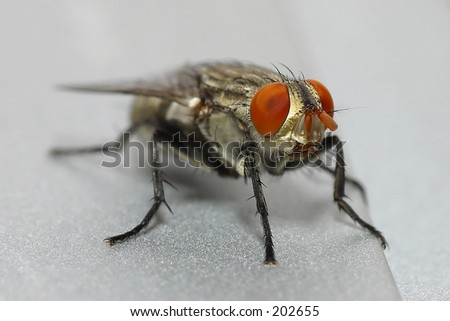 Front View of House House Fly Front View
