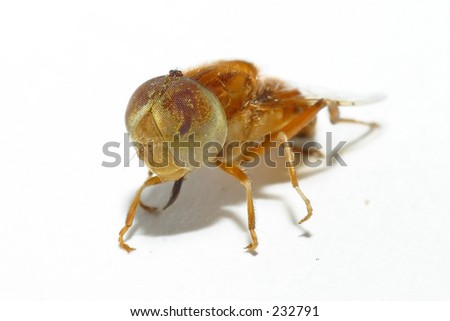 Front View of House House Fly Front View Stock