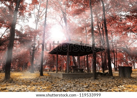 House in autumn forest.