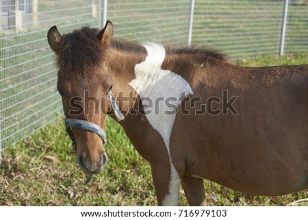 Shutterstock House in farmhouse. The horse is one of two extant subspecies of Equus ferus. It is an odd-toed ungulate mammal belonging to the taxonomic family Equidae.