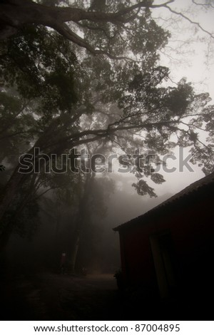 House in foggy woods