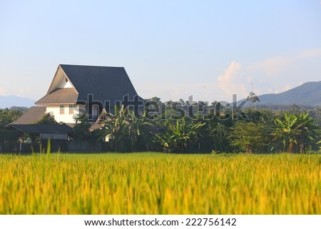 house in nature north of Thailand