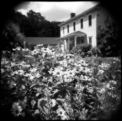 House in Southern Gothic style seen beyond a bed of daisies. The photo was taken on film with a Holga toy camera, which gives it a unique vintage appearance difficult to recreate digitally.