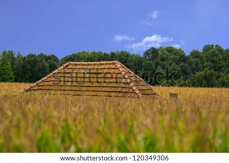 house in the middle of a cornfield