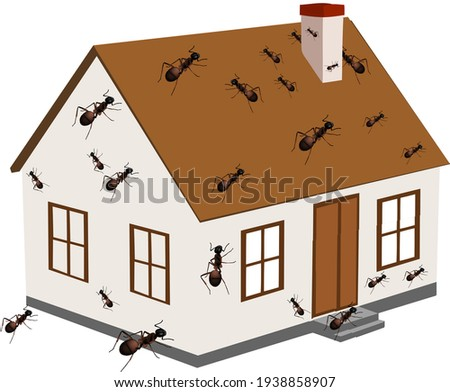 house infested with ants house infested with ants Foto stock ©