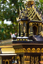 house of spirits for worshiping deities, a tradition of veneration of saints in Thailand, on the tables are offerings of flowers of orchids and incense, a cat lies and rests near the house of spirits