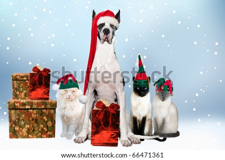 House pets aDorned with Christmas hats and gifts