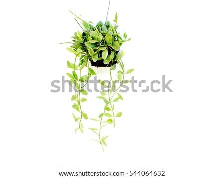 house plant hanging on white background