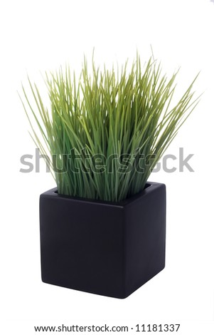 house plant in a square pot isolated on white