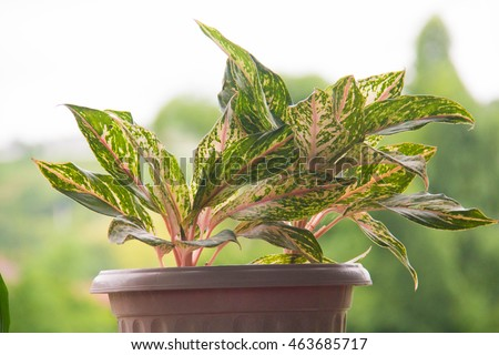 House plant in potted #463685717