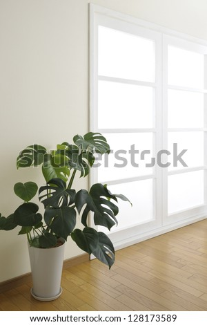 House plant in room with window